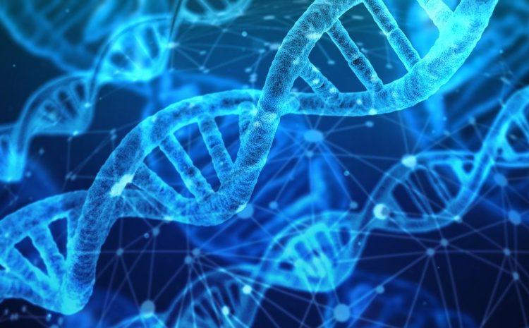 Po genetických stopách Féničanů